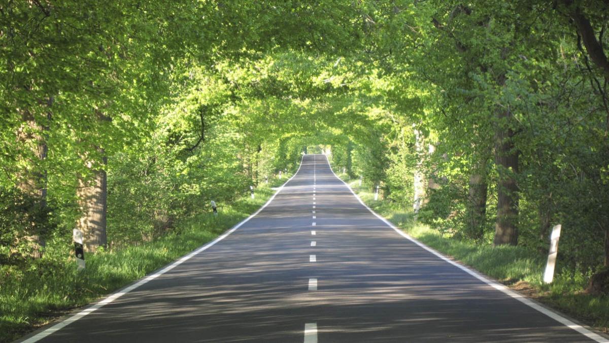 Landstraße mit Bäumen